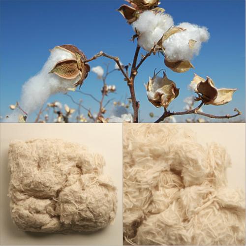 bawelna cotton algodón
