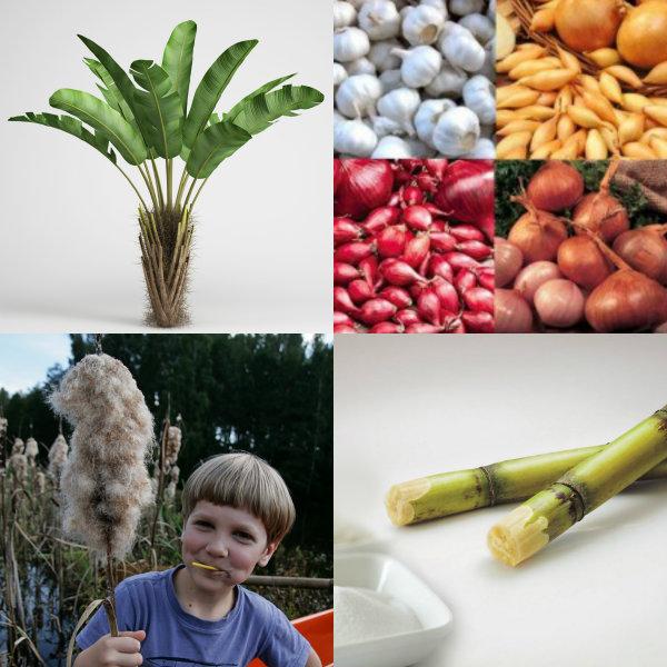 various plant fibers